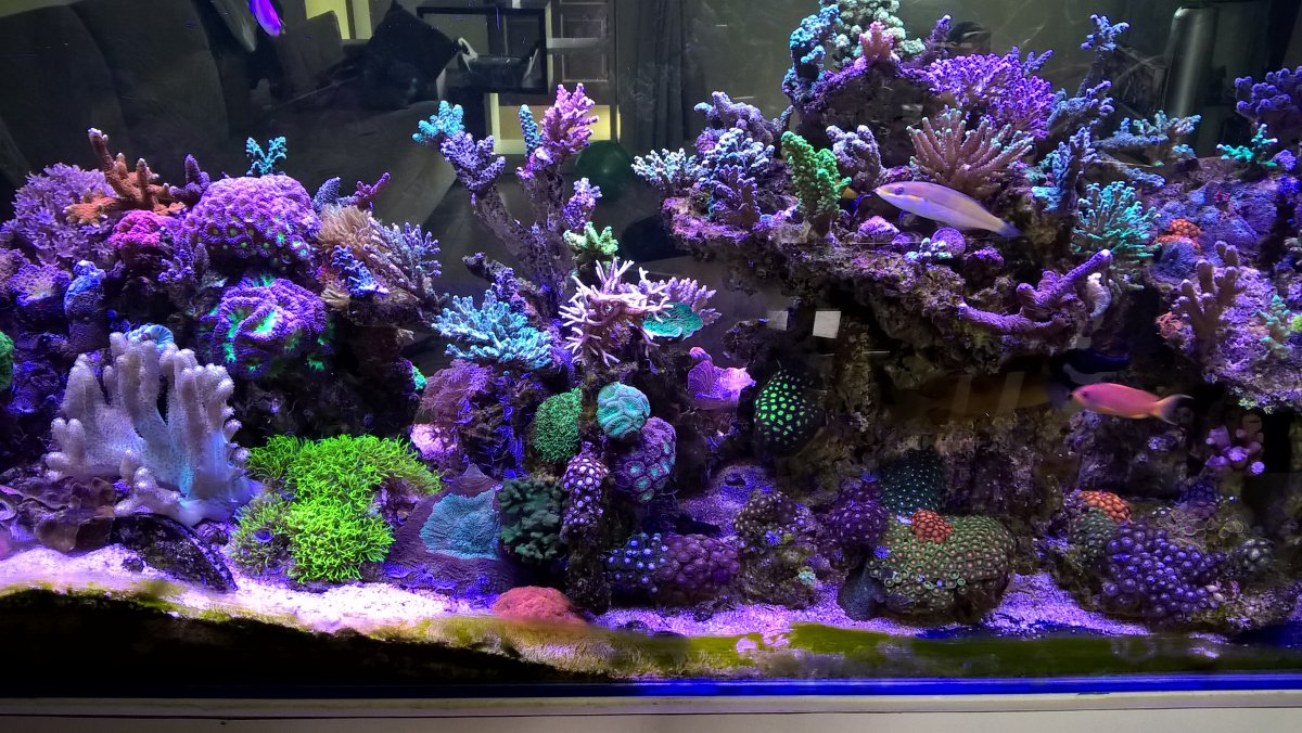 Diy Leds People Still Doing This Reef2reef Saltwater And Reef Rapid Led Wiring Diagram Click