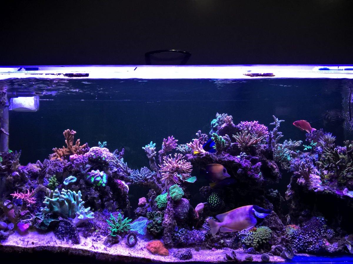Aquascape Ideas 75 Gallon Reef Tank Aquascape