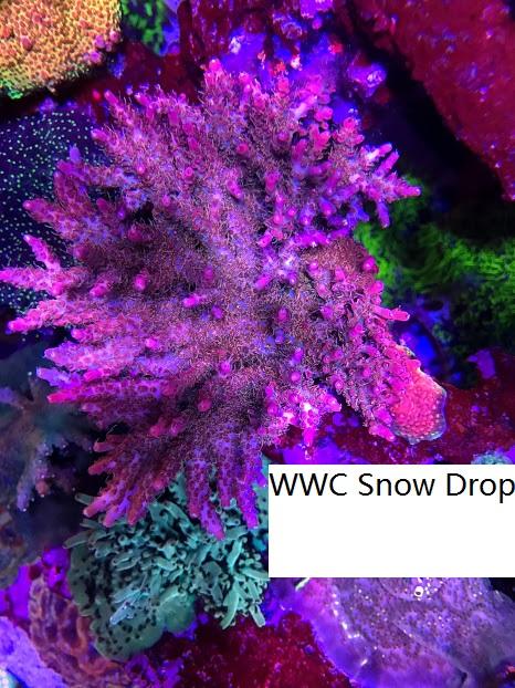 WWC SD.jpg
