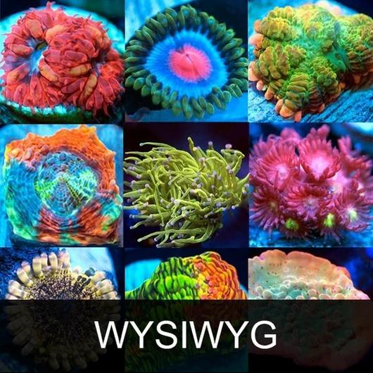 WYSIWYG.jpg