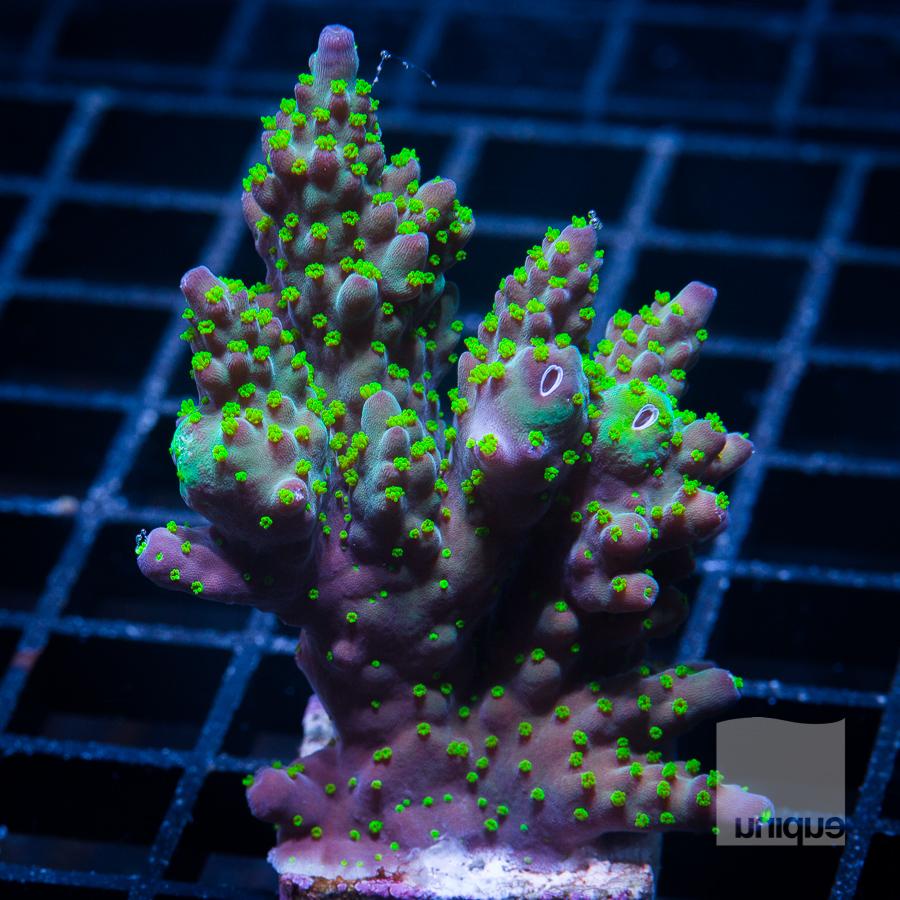 xl garf bonsai 52 32.jpg