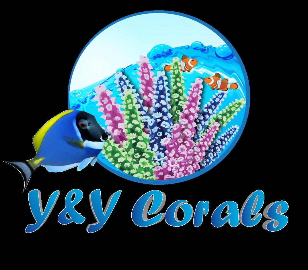 Y and Y Corals.png