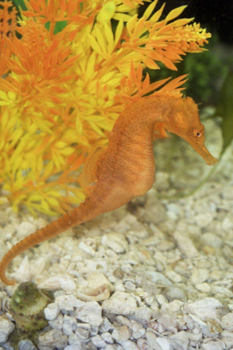yellowmatchhitch-fishrforme.jpg