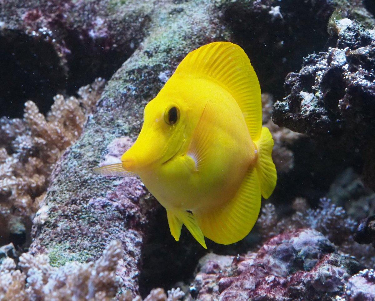YellowTang2019102201.jpg
