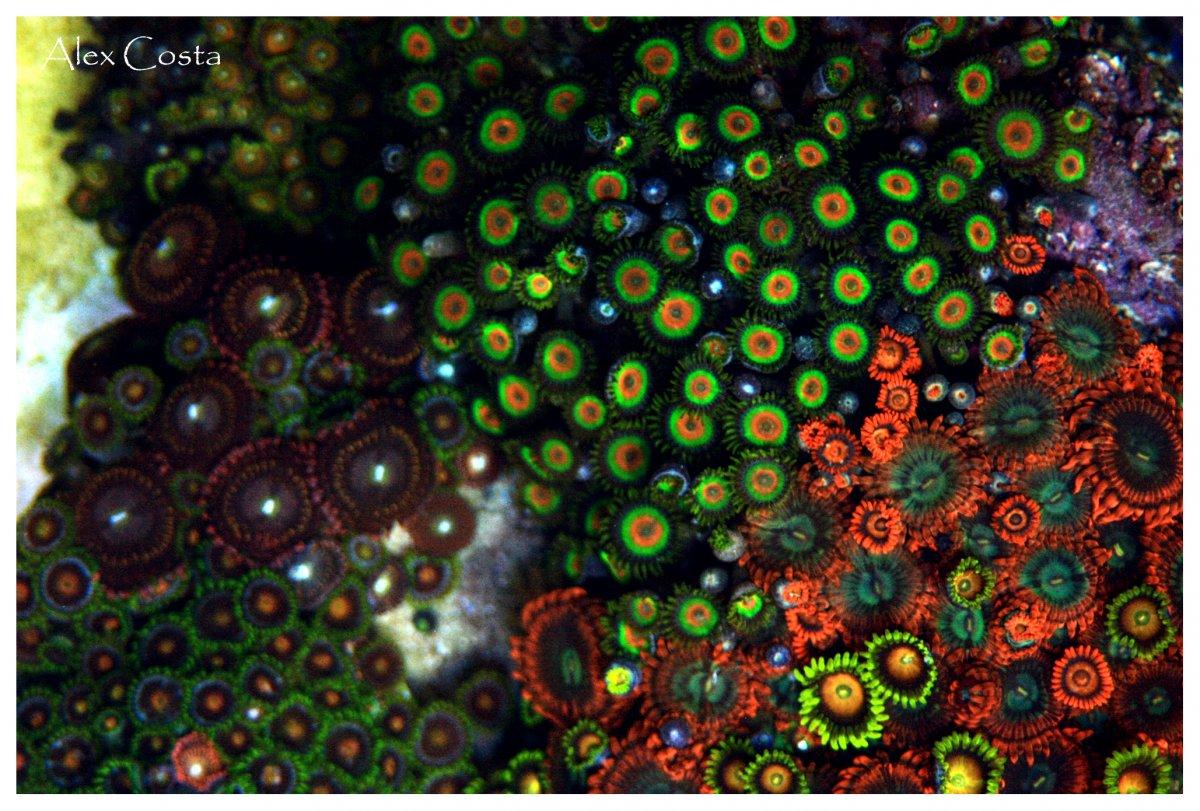 zoas-garden5.jpg