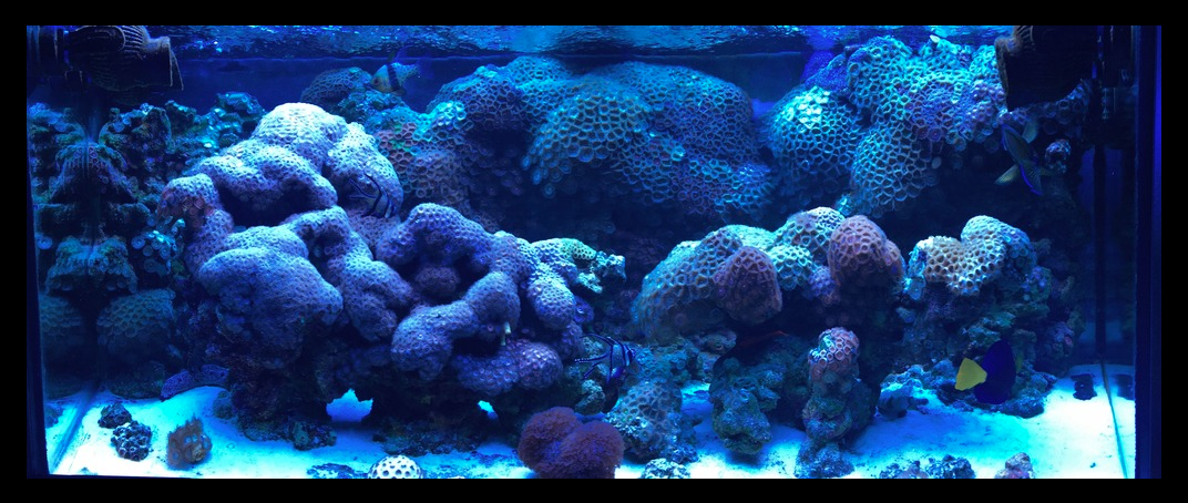 zoas under T5s.png