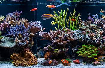 the supreme guide to setting up a saltwater reef aquarium gallery