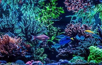 R2r Reef Of The Month Spotlight J 250 Nio Melo February