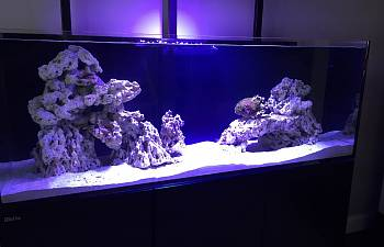 R2r Reef Of The Month Spotlight Broadfield March 2017
