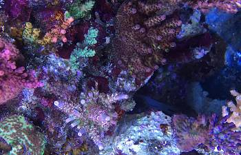 Tank Parameters Of Some Masters Reef2reef Saltwater And
