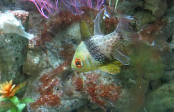 Keeping Seahorses In Aquaria 3 Stocking Your Seahorse
