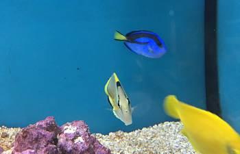 Lfs Fish Treatment Amp The Sudden Need For Quarantine