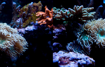 Your Guide To Aquarium Photography 2 Preparing For A