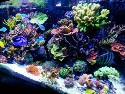 Reef of the Month, May, 2019, @reef jacob