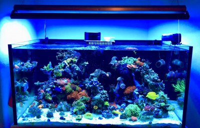 What Equipment Do You Need to Start a Reef Aquarium?
