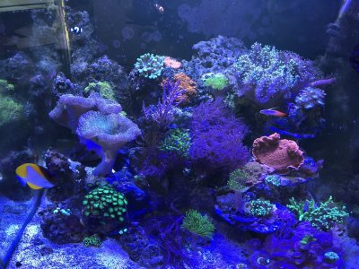 What's the Difference Between a Saltwater and a Freshwater Aquarium Aside From the Salt?