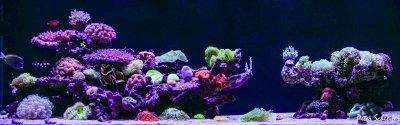 Checklist: Before You Start Your First Saltwater Aquarium