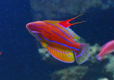 What's Wrong With My Wrasse?