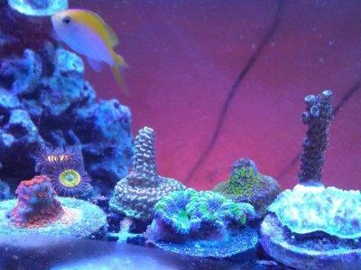 Josie with Corals.jpg