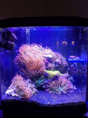 inTank WATER DIRECTOR FOR OCEANIC /& CORALIFE BIOCUBE 29 AND LED BIOCUBE 32