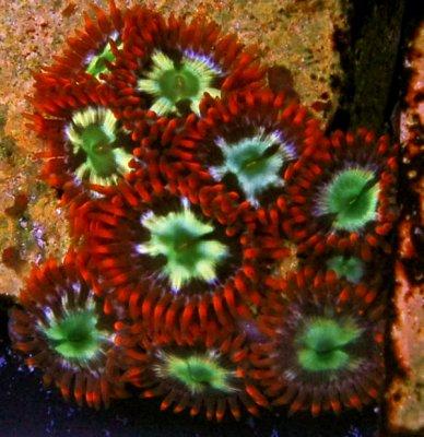 ringoffirezoa_22610.JPG