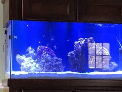before coral.jpg