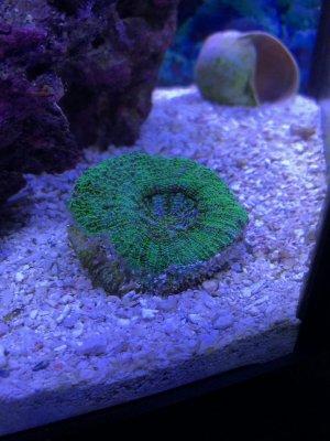 Sick Coral.jpg