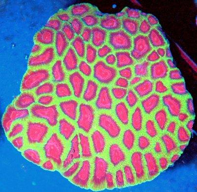 1 favorite coral.jpg