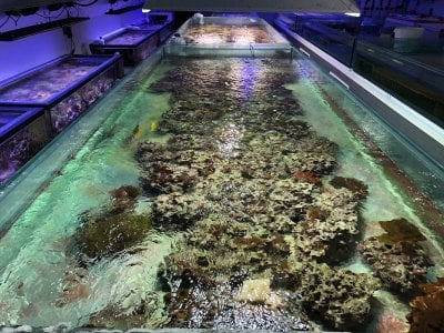 The Microbial Community in a Professional Coral Aquaculture System