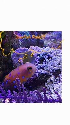 Wish list fish_04.jpg