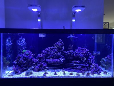 Looking For Aquascape Ideas Reef2reef Saltwater And Reef Aquarium Forum