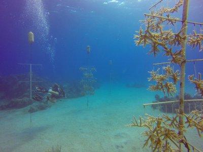 Coral nusery farm2 (1 of 1).jpg