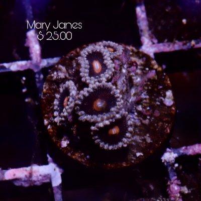 Mary 5p 25.jpg