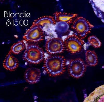 Blondie 10+p 15.jpg
