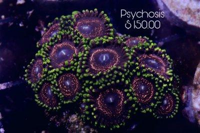Psychosis 15+p 150.jpg