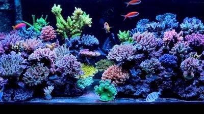 T5 Reef.jpg