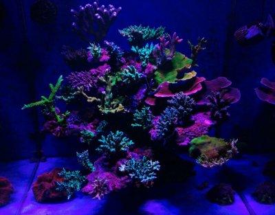 coral pop.jpg