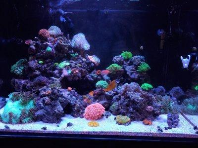 aquarium 90g.jpg