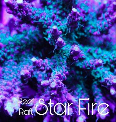 star fire.jpg