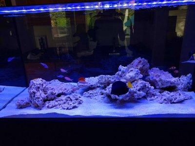 Aquarium 1.jpg