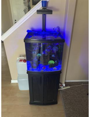fish tank 1.png