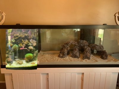 fish tank 6.JPG