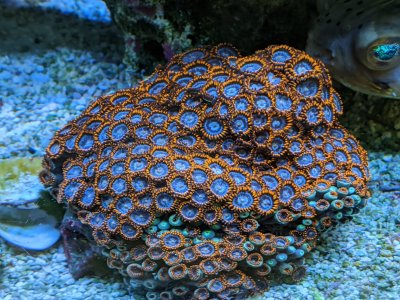 Fire and Ice Zoas.jpg