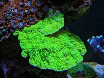 Green Monti Cap.jpg