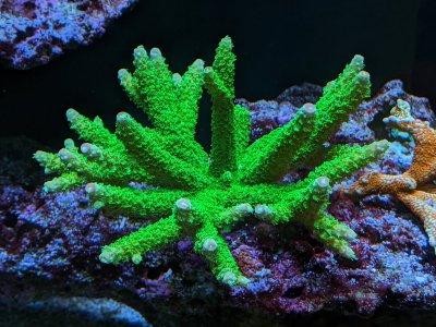 Green Slimer.jpg