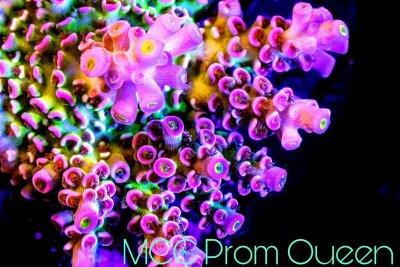 prom queen web.jpg