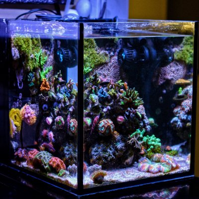Big or Small? Picking Out Your First Reef Tank