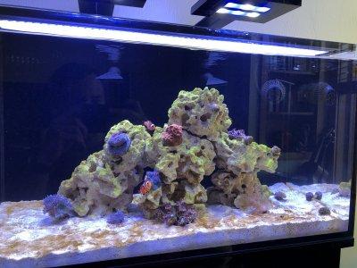 Reef Tank.jpg