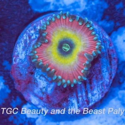 beauty-and-the-beast-1200x1200.jpg