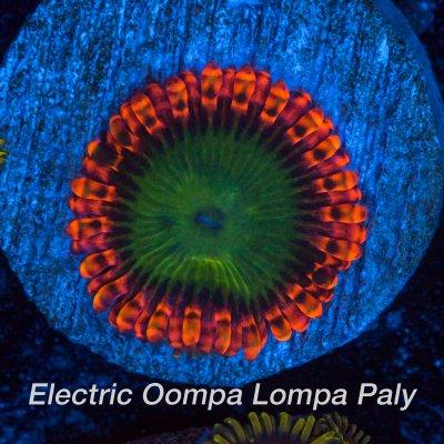 Electric-oompa-1200x1200.jpg